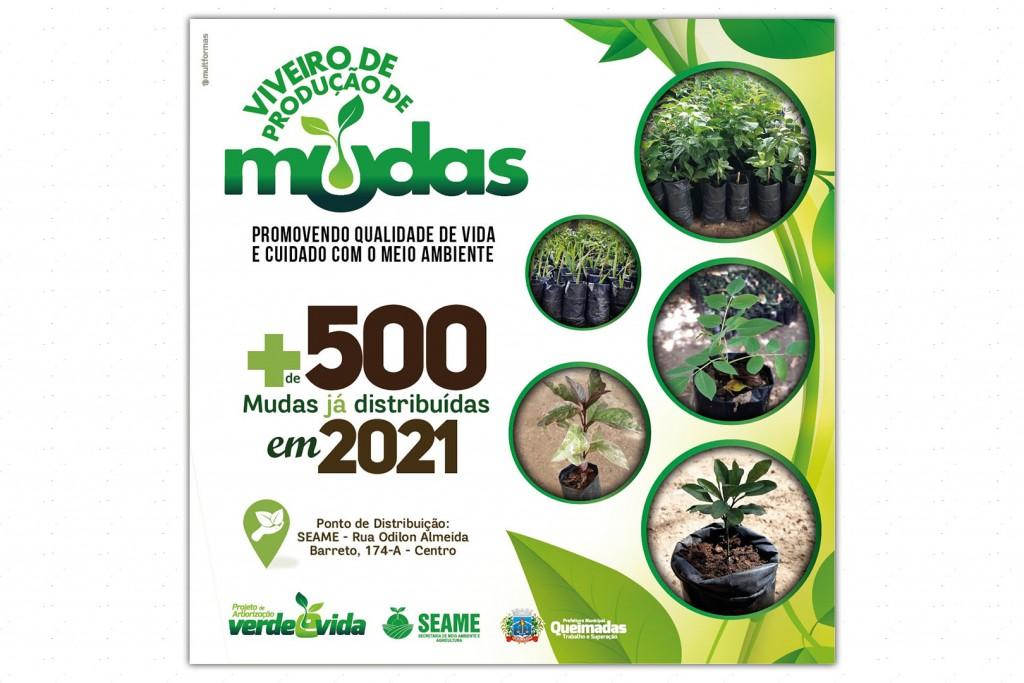 Projeto de arborização já distribuiu mais de 500 mudas em 2021